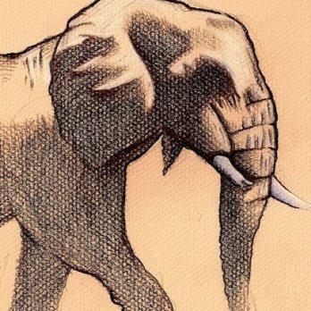 elephant_resize_resize